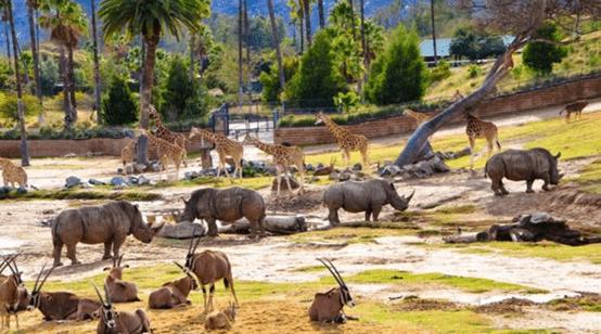 حديقة حيوانات سان دييغو البرية