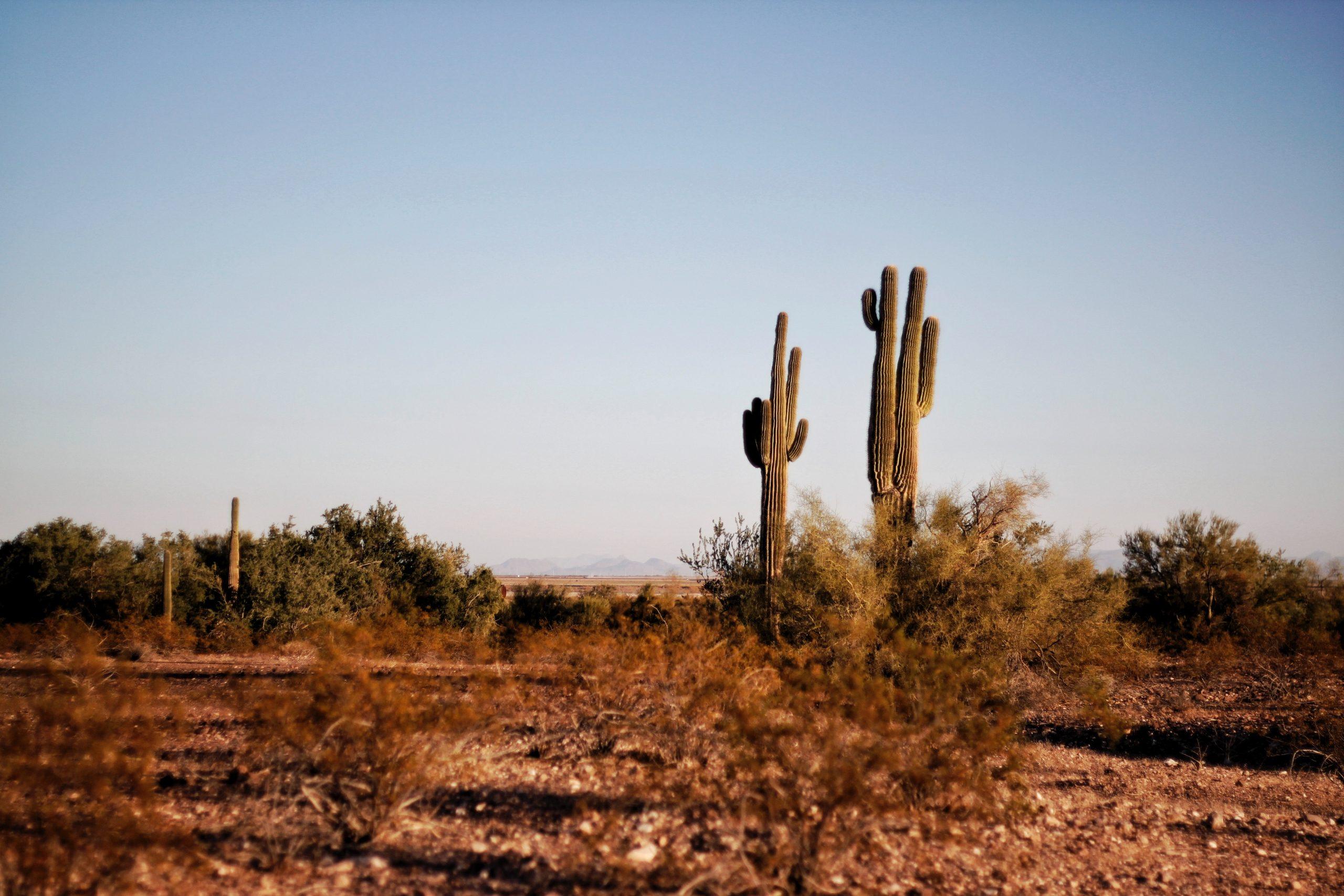 أريزونا موطن الطبيعة الصارخة والصحارى الشاسعة | دليلك السياحي