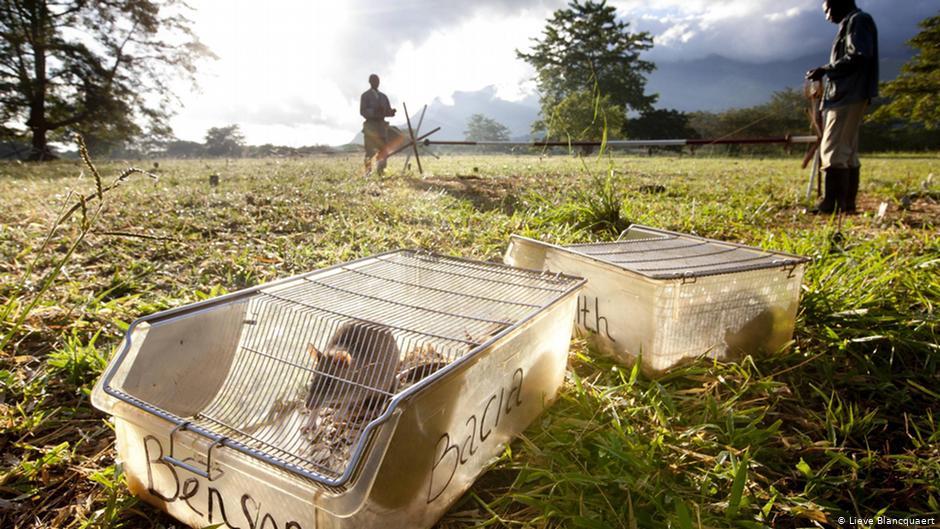 قانون احتجاز الفئران في امريكا