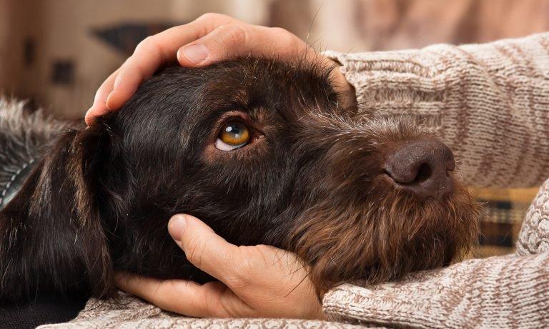 الحيوانات الأليفة في أمريكا .. إليك 10 من أفضل أنواع الكلاب في أمريكا