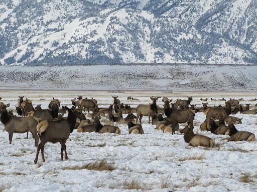 الحيوانات البرية الأمريكية الشهيرة