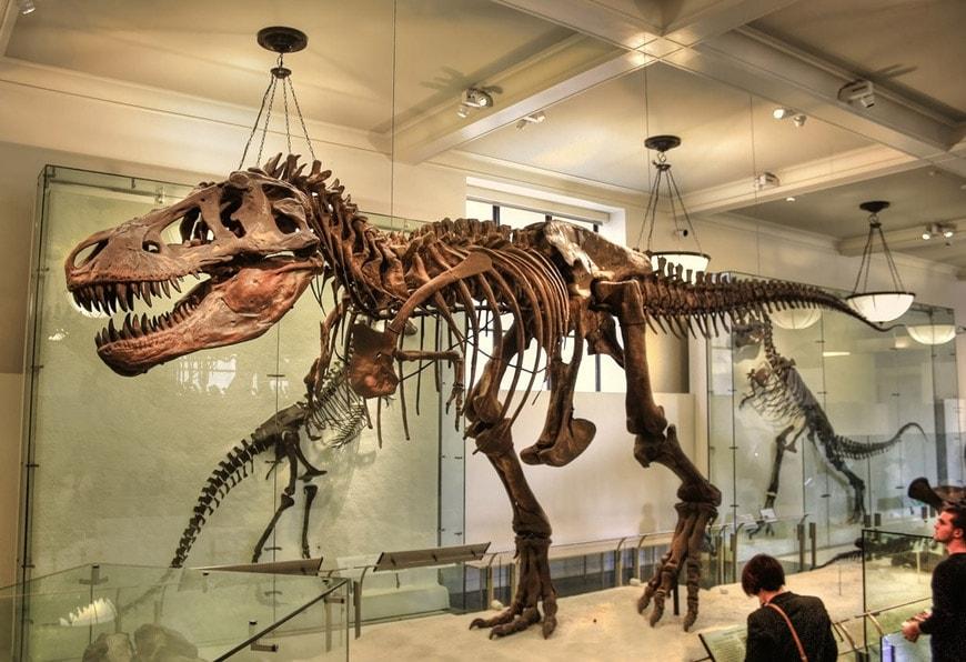 متاحف نيويورك