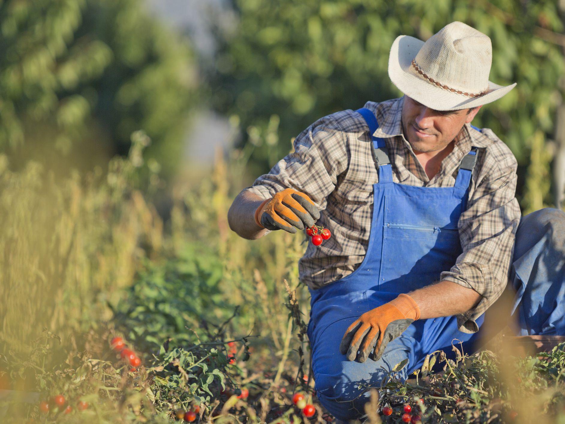 خصائص الزراعة في أمريكا