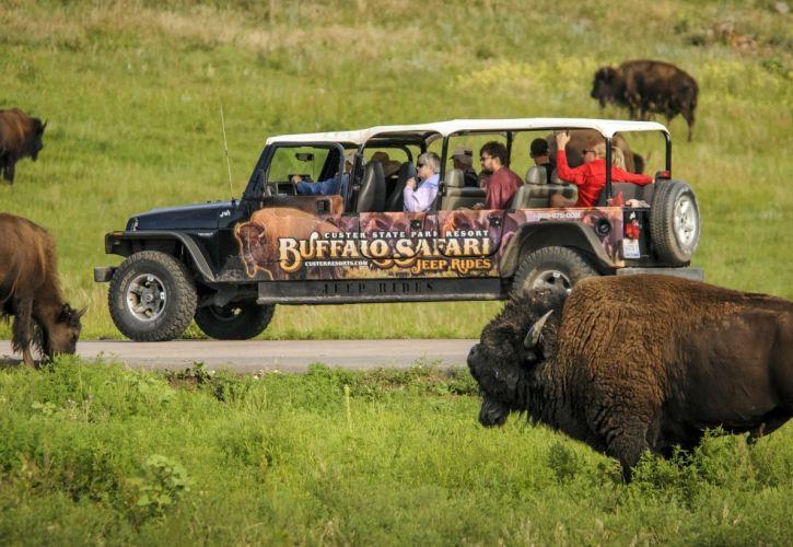 أفضل 5 رحلات سفاري للحياة البرية في امريكا