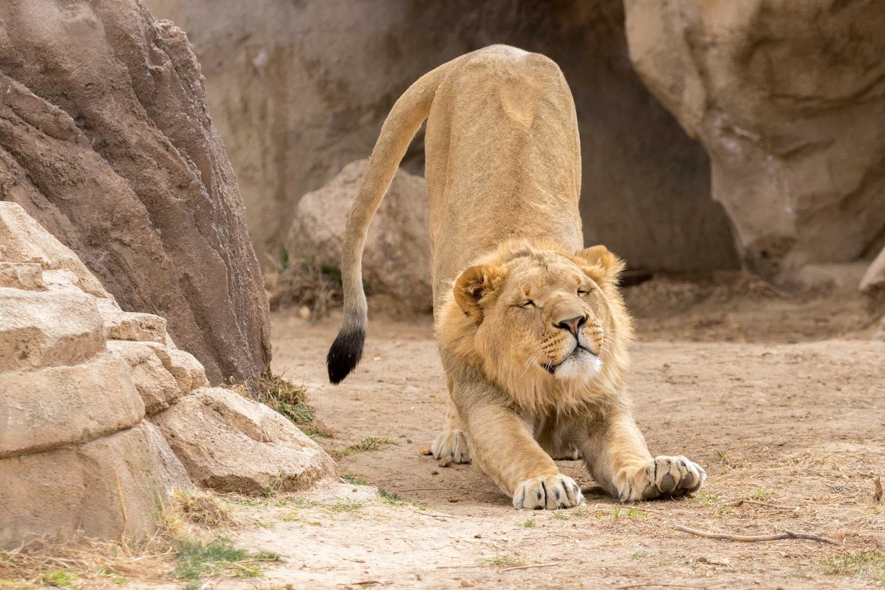 Denver Zoo — Denver, Colorado