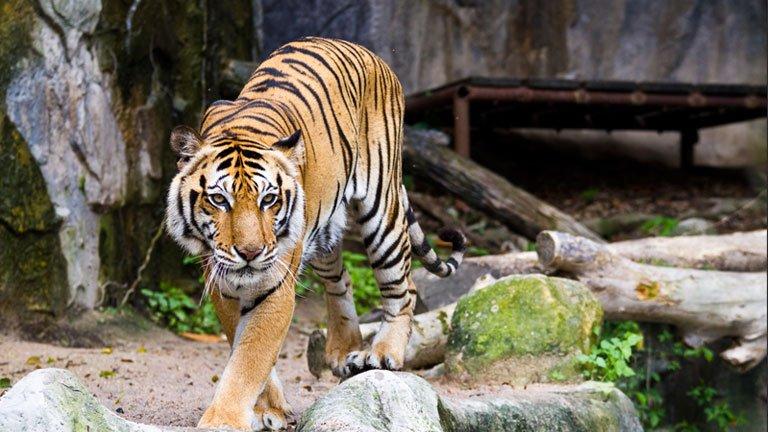 Lincoln Park Zoo — Chicago, Illinois