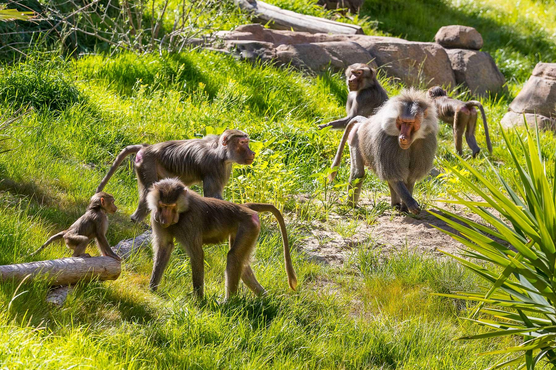 San Diego Zoo — San Diego, California