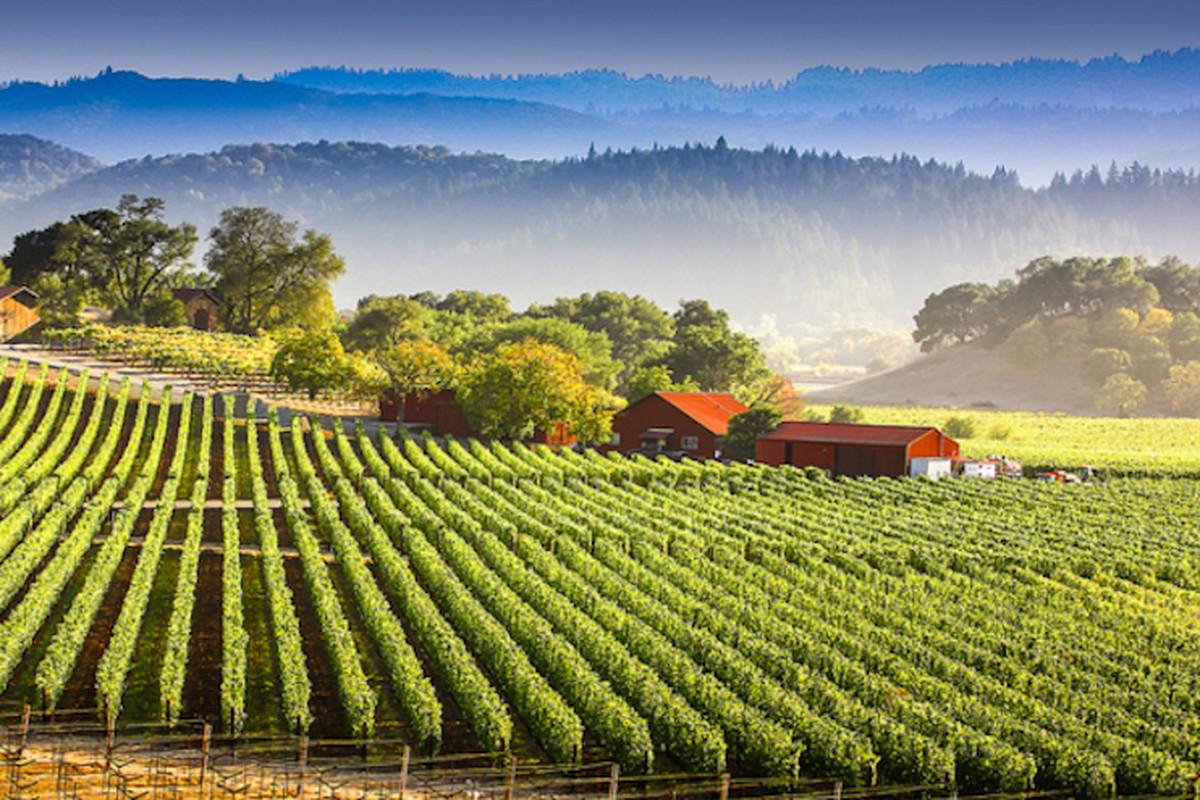 سان فرانسيسكو: أفضل الرحلات النهارية في 2021
