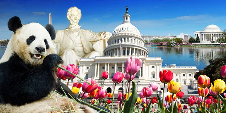 السياحة في واشنطن: 7 نصائح لتوفير اموالك