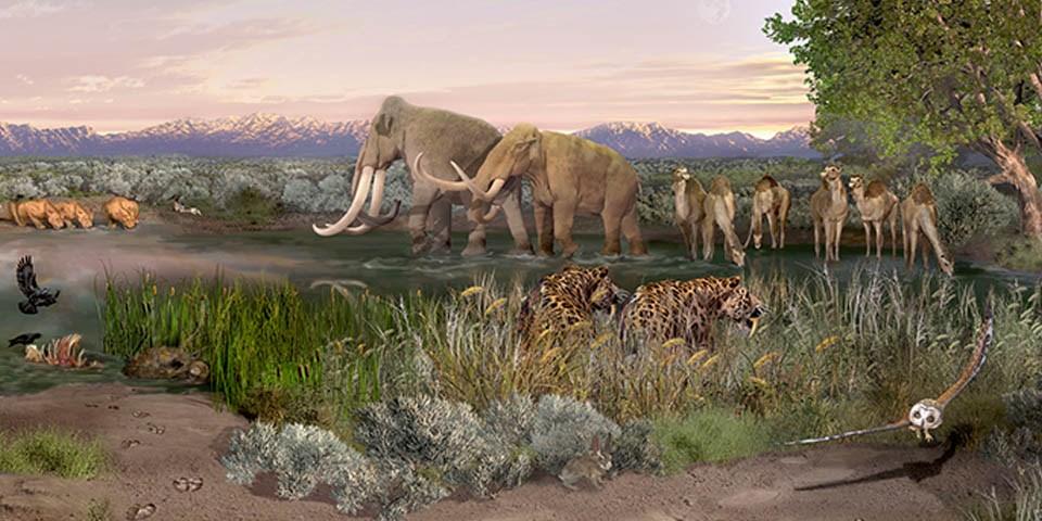 البشر عاشوا في أمريكا الشمالية قبل 23000 عام - بحث جديد