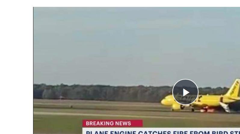 مطار نيوجيرسي يشهد حريق بسبب طائر - فيديو